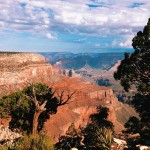 Pinyon pines and cumulous clouds above Grand Canyon