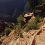 The Grandview Trail descends steeply through the Kaibab Limestone