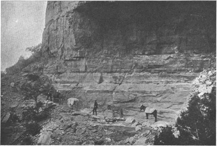 1890s photograph of John Hance and mules on one of his Grand Canyon trails.
